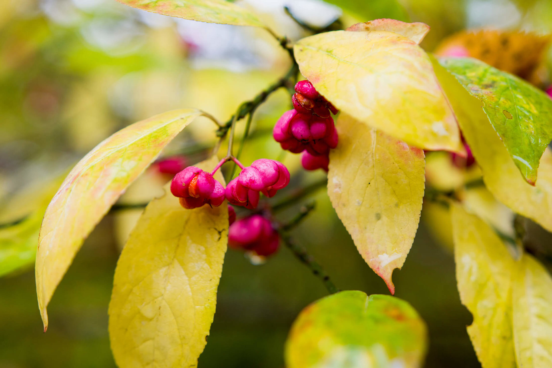 Fruit of the Poisonous Tree | Best Illinois DUI lawyer